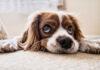 Jak przygotować psa na wakacyjny wypoczynek